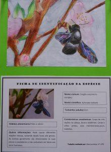 ilustração científica escola santo antónio